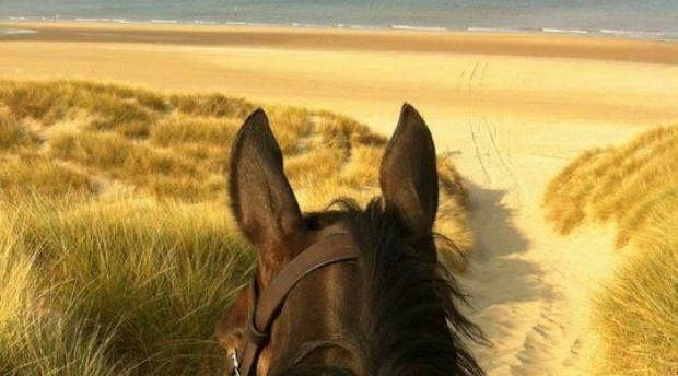 Beach Horse Ride, Port Elizabeth