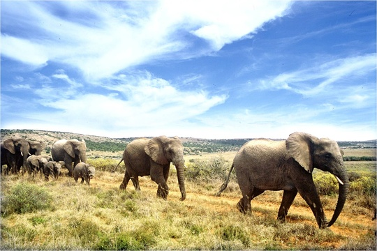 Addo Elephant Park Day Tour Port Elizabeth