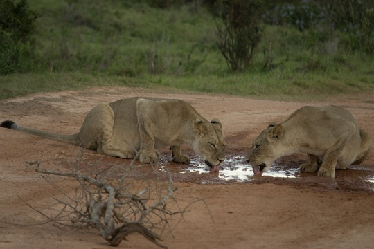 2 Day Addo Elephant Park Safari