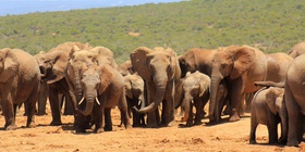 Addo Elephant Park Full Day Safari