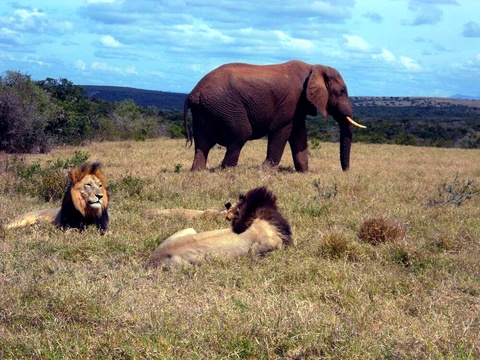 Big 5 Private Safari, Afroventures Adventure Company