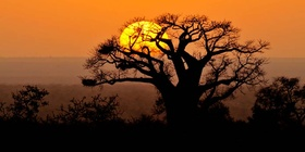 4 Day Kruger National Park Bush Experience