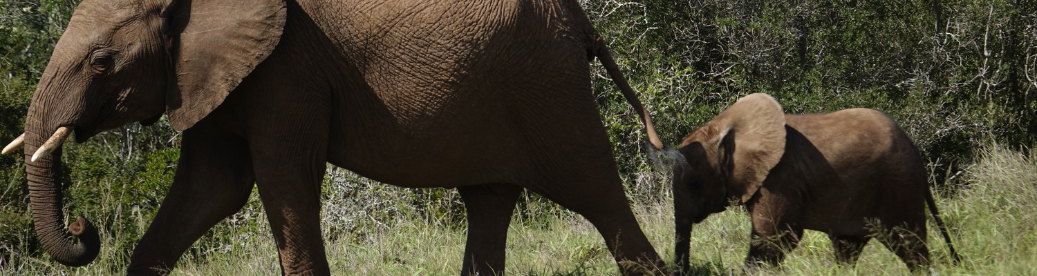 Addo Elephant National Park Tour